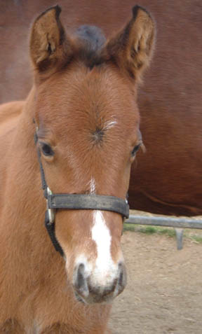 Amber 2007 filly