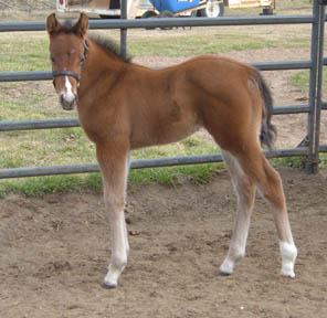 Amber, 2007 Filly